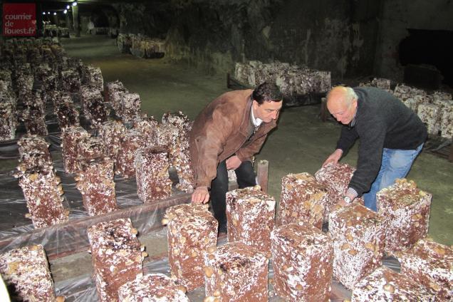 La production du champignon en cave est devenue une rareté.