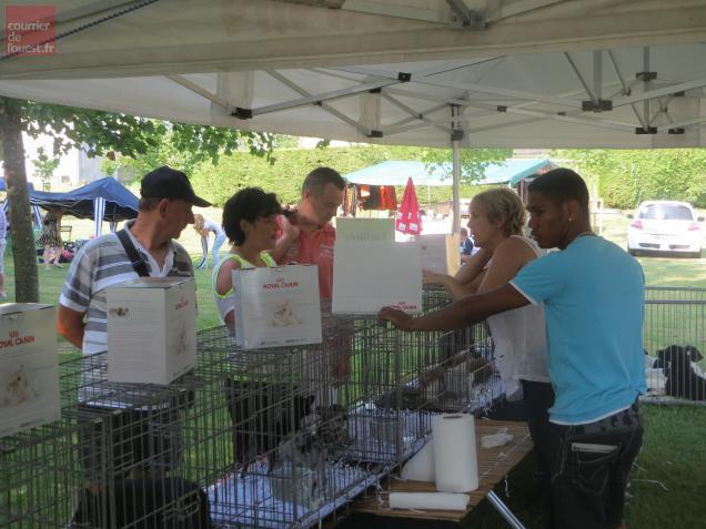 300 chiens et chiots attendent ce dimanche un maître à Verruyes.
