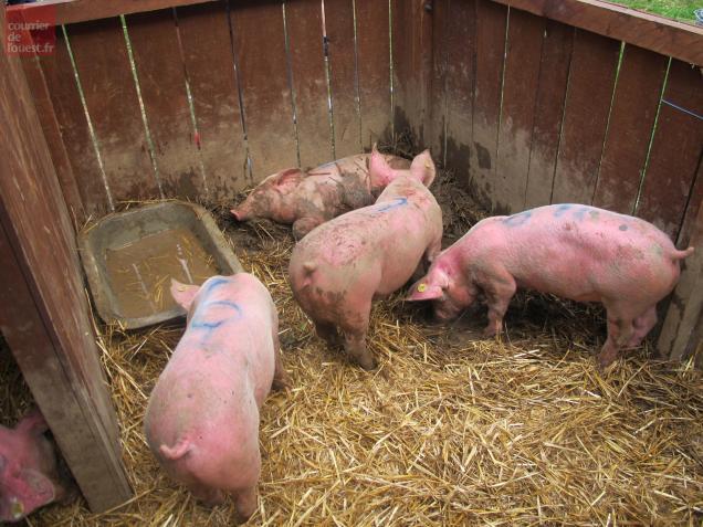 La Jumellière. Un dimanche pur porc à la Fête du Cochon !