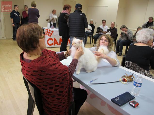 Chacun a présenté un ou plusieurs chats à l'un des quatre éminents jurés, chargé d'ausculter l'animal sous tous les angles.