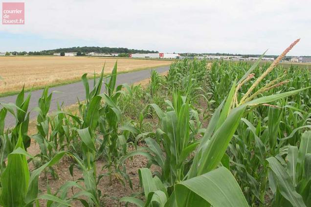 Deux Sevres Le Prix Des Terres Agricoles Augmente Legerement