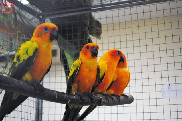 Niort une bourse aux oiseaux au parc des expositions for Parc des expositions niort